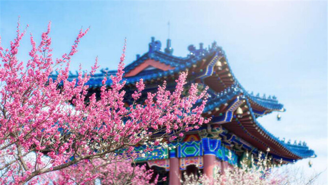 China Nanjing International Plum Blossom Festival 南京梅花节